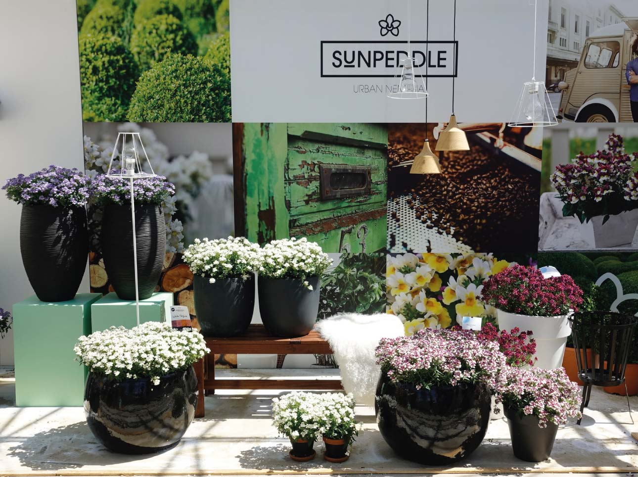 SUNPEDDLE® | Urban Nemesia | Flower Trials